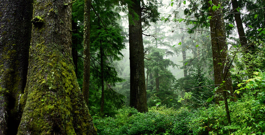 An old-growth forest in Oregon. Image: David Patte/U.S. Fish and Wildlife Service